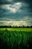 Sturmwolken, die auf das grüne Feld sich nähern lizenzfreies stockfoto