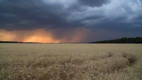 Sturmwolken im Sonnenunterganghimmel über einem Feld des Weizens Himmel und Ozean auf Sonnenuntergang stock video
