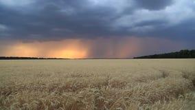 Sturmwolken im Sonnenunterganghimmel über einem Feld des Weizens Himmel und Ozean auf Sonnenuntergang stock video footage