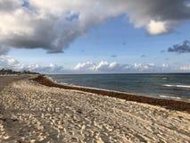 Sturmwolken und -meerespflanze auf dem Strand Stockbilder