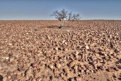 Sturt stony desert, South Australia Royalty Free Stock Photo