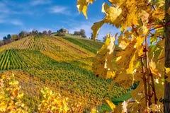 Stuttgart Germany Grabkapelle Vineyards Autumn Fall Season Beaut. Iful Landscape Farming Agriculture Wine royalty free stock photos