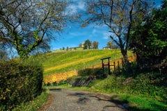 Stuttgart Germany Grabkapelle Vineyards Autumn Fall Season Beaut. Iful Landscape Farming Agriculture Wine royalty free stock image