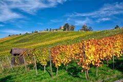 Stuttgart Germany Grabkapelle Vineyards Autumn Fall Season Beaut. Iful Landscape Farming Agriculture Wine stock photos