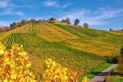 Stuttgart Germany Grabkapelle Vineyards Autumn Fall Season Beaut. Iful Landscape Farming Agriculture Wine royalty free stock photo