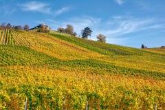 Stuttgart Germany Grabkapelle Vineyards Autumn Fall Season Beaut. Iful Landscape Farming Agriculture Wine stock photography