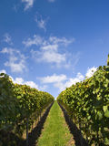 Stuttgart vineyards with blue sky Stock Photo