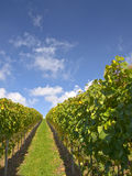 Stuttgart vineyards with blue sky Stock Images