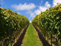 Stuttgart vineyards with blue sky and clouds royalty free stock photos