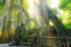 Stutue in Sacred Monkey Forest, Ubud, Bali, Indonesia Royalty Free Stock Photos