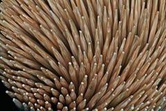 Stuzzicadenti di legno del fondo Fotografia Stock