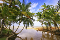 Sötvattens- flod på den Las Terrenas stranden, Samana halvö Arkivfoto