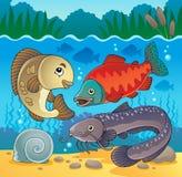 Sötvattensfisktemat avbildar 5 Arkivfoto