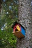 Stwarza ognisko domowe ptak Zdjęcie Royalty Free