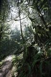 stworzenie sylwetki gałęzi drzewa przekraczają Obraz Stock
