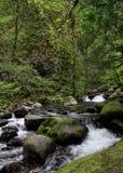 stworzył moss objętych gwałtownych kamieni strumienia Obraz Stock