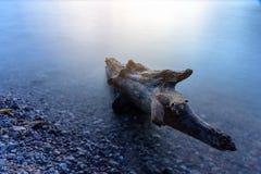 Stycke av den döda stubben i vatten Fotografering för Bildbyråer