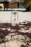 Stycke av den fäktade stranden som skyddar äggen av sköldpaddor som läggas, i Tulum royaltyfri bild