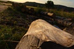 Stycke av gammalt trä utan bork royaltyfri foto