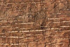 Stycke av trä med fläckar av sand Arkivbild