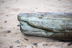 Stycke av trä på sand royaltyfri bild