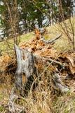 Stycken av det klippta trädet Arkivfoto