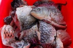 Stycken av fisken som är klara för att laga mat Arkivbilder