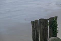Stycken av stranden Royaltyfria Foton