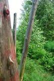Stycken av trä   fotografering för bildbyråer