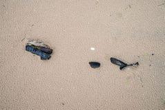 Stycken av trä på den våta stranden arkivfoton