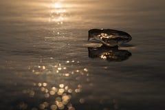 Stycket av is gillar en fågel i solnedgångljus arkivbild