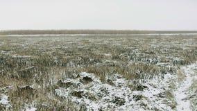 Styczeń 33c krajobrazu Rosji zima ural temperatury Śnieżny pole, płocha w bagnie zakrywającym z mrozem zbiory wideo
