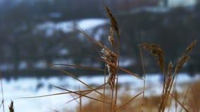 Styczeń 33c krajobrazu Rosji zima ural temperatury zdjęcie wideo