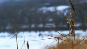 Styczeń 33c krajobrazu Rosji zima ural temperatury zbiory wideo