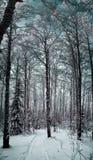 Styczeń 33c krajobrazu Rosji zima ural temperatury Drzewa w śniegu Śnieg i mróz Obraz Stock
