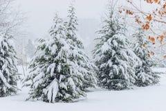 Styczeń 33c krajobrazu Rosji zima ural temperatury E obrazy stock