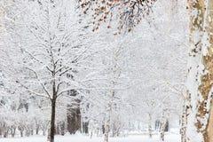 Styczeń 33c krajobrazu Rosji zima ural temperatury objętych śnieżni drzewa zdjęcia stock