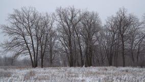 Styczeń 33c krajobrazu Rosji zima ural temperatury objętych leśny śnieg zbiory