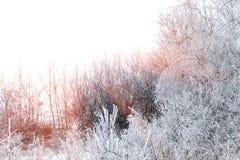 Styczeń 33c krajobrazu Rosji zima ural temperatury pogodny kraju dzień Obrazy Royalty Free