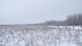 Styczeń 33c krajobrazu Rosji zima ural temperatury Rzeka i las zakrywający z śniegiem zbiory