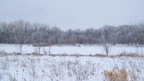 Styczeń 33c krajobrazu Rosji zima ural temperatury Rzeka i las zakrywający z śniegiem zbiory wideo