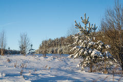 Styczeń 33c krajobrazu Rosji zima ural temperatury słoneczny dzień Zima spadek Jaskrawi kolory Prosty krajobraz Zimy lasowa lasow Fotografia Royalty Free
