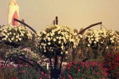 STYCZEŃ 30: Dubaj cudu ogród, UAE nad z milion kwiatami Styczeń 30 2017 Obraz Royalty Free