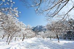 Styczeń 33c krajobrazu Rosji zima ural temperatury Zdjęcia Stock