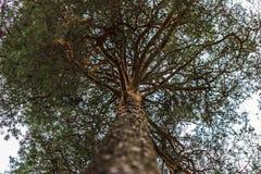 Styczeń 22, 2017: Drzewo w Skogskyrkogarden cmentarzu w Stockh Zdjęcia Royalty Free