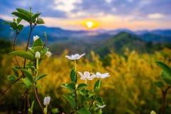 1 Stycznia 2018-Phang nga: Wschód słońca przy Phu Ta Tun punkt widzenia Phang nga prowincją zdjęcie stock