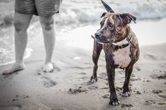 Stygg hundkapplöpning på stranden Royaltyfria Bilder