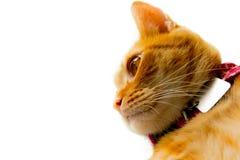 stygg katt Arkivfoto
