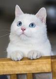 Stygg lite katt Arkivbild