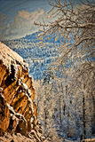 Styilized Winter Mountain Scene. Rocky Mountain firs and pines, Montana, in the Garnet Mountain Range overlooking the Blackfoot Valley Stock Photography